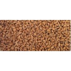 Pšeničný slad - svetlý 25 kg